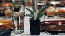 Tequila glasses next to an agave plant on a table