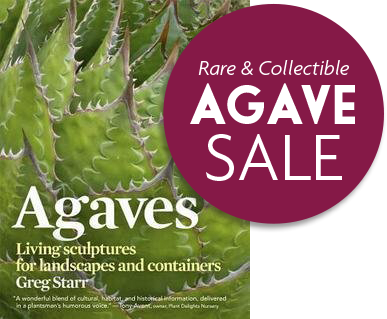 Book cover: Agaves Living sculptures for landscapes and containers
