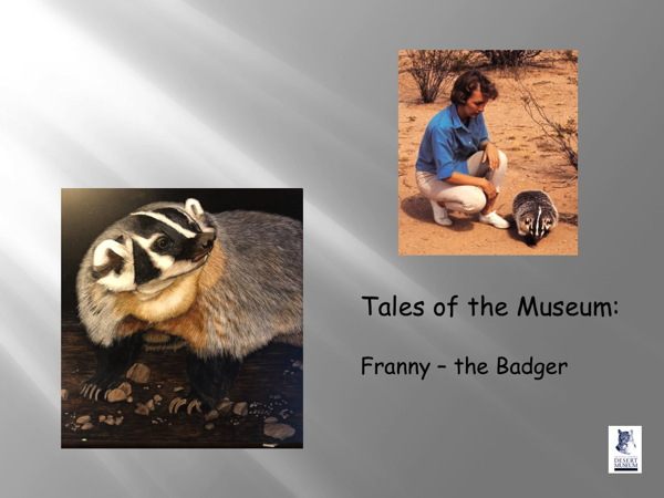 Franny - the badger
