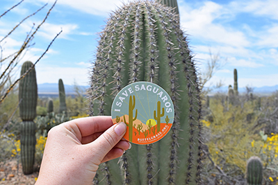 Person holding up a I Save Saguaros sticker in front of a saguaro