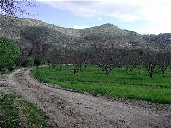 Picture of fruit tree orchard