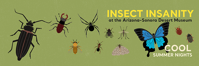 Insect Insanity graphic