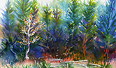 Watercolor of pine trees