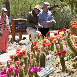 Guests enjoy Torch Cactus blooms