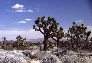 Mohave Desert image gallery