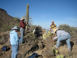 Botanists working on landscaping in the desert