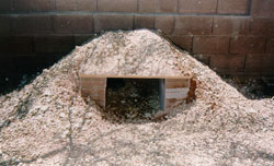tortoise burrow example